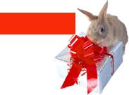 """הכנס/י שם ומייל וקבל/י במתנה דו""""ח 2014 לטיפול טבעי בהפרעות קשב וריכוז ללא ריטלין"""
