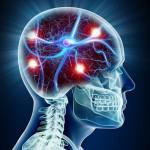 עיבוד נתונים במוח