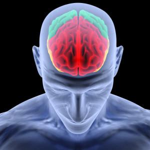 הפגיעה בהפרעות קשב וריכוז בחלק הקדמי של המוח ובגרעיני הבסיס. אם ניכנס לתוך נוירון (תא עצב אחד) נראה שלפוחיות. בקצה העצב מצטבר חומר הדופמין (מוליך עצבי) ולפי גירוי עצבי הוא אמור להשתחרר. ההשארה שכאן, בשחרור טרנסמיטר הדופמין יש בעיה ואין רצף אחיד בסיגנל.